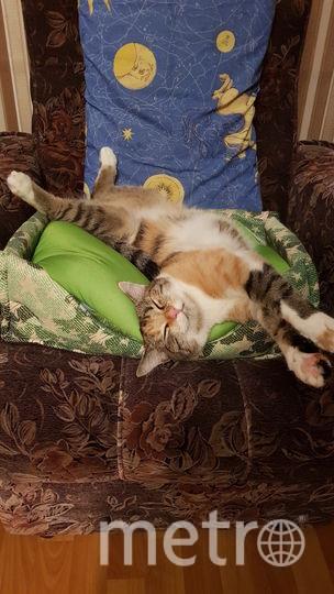 Это наша любимица кошечка Джесси. Очень любит поспать, но больше всего обожает играть. Фото Елена