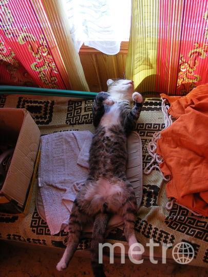 Это наш кот МЯУТ, Отдыхает на даче после бурной ночи. Фото Марина