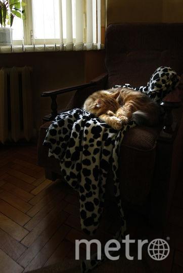 Если уж спать, то на мягком. Любимая всеми в семье сибирская кошка Греза. Фото Наталья