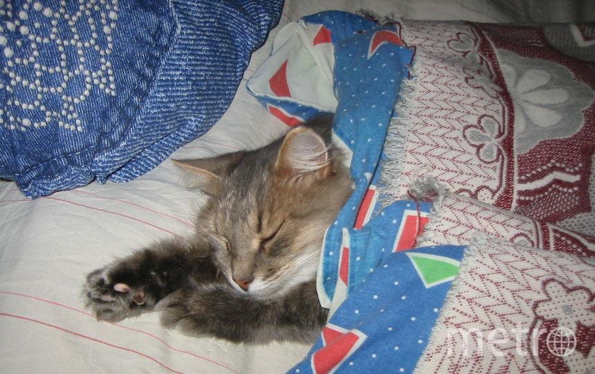 Ох, не рано встаёт охрана. Кошка Грэя. Фото Мария
