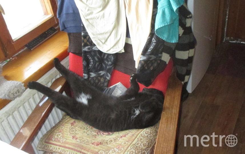 Наш пушистый чёрный дружок Негрито, разлёгся на кресле, нежится, лапки вытянул и отдыхает... Фото Денис