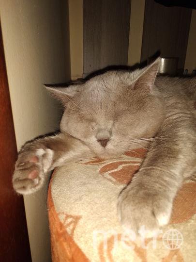 Кота зовут Васька . Он очень добрый и игривый. Умеет говорить слово Мама. Фото Оля