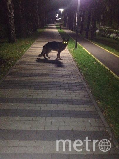 """""""Она повернула свою пасть и сверкнула горящими глазами"""" . Это наш добрейший пес-Баська. Фото Мария"""