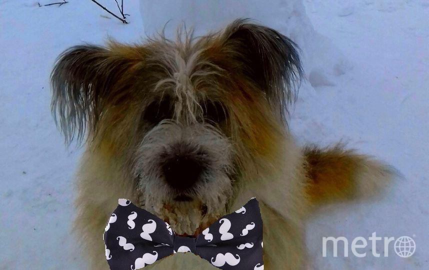 Пса зовут Чуня, считался, жил в приюте, взяли, когда ему было 4 года. У нас полтора года. С виду смешной и трогательный пес, но отличный охранник! Охраняет нас и своих маленьких друзей, очень любит маленьких песиков. Фото Сергей