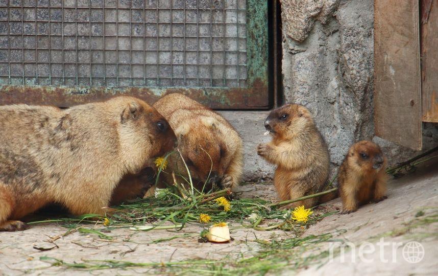 Семейство сурков. Фото Ленинградский зоопарк, vk.com