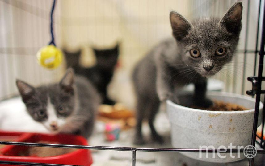 Кошки, архивное фото. Фото Getty