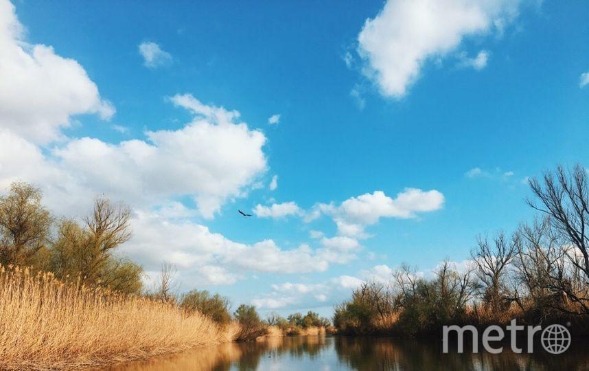 По пути в авандельту Волги туристы могут наблюдать полёт хищных орланов-белохвостов. Фото Виктория Стаценко