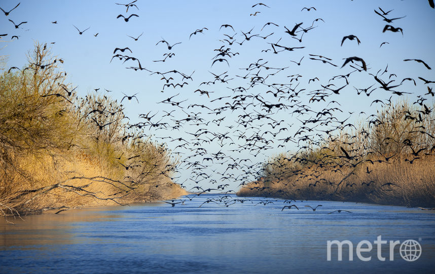 По пути в авандельту Волги туристы могут наблюдать полёт хищных орланов-белохвостов. Фото Предосталено заповедником.