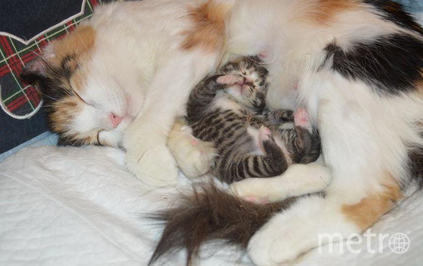 """кошка Анфиса со своим новорожденным котёнком, которого я назвала Крош. Фото Наталия Николаевна, """"Metro"""""""