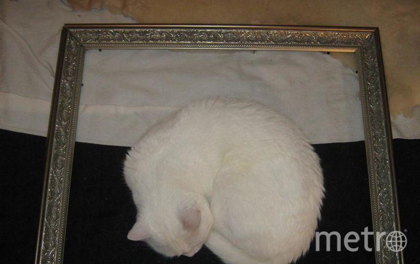 "фото ""Сон кошки Доротеи"". Фото Хозяйка Евгения., ""Metro"""