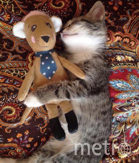 """Кошка Лисик тут еще котенок. Настоящей дружбе ничто не помеха. Фото Марина Шулятьева, """"Metro"""""""