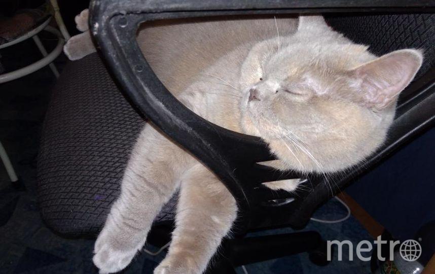 """кошка Кисяндра. Фото """"Metro"""""""