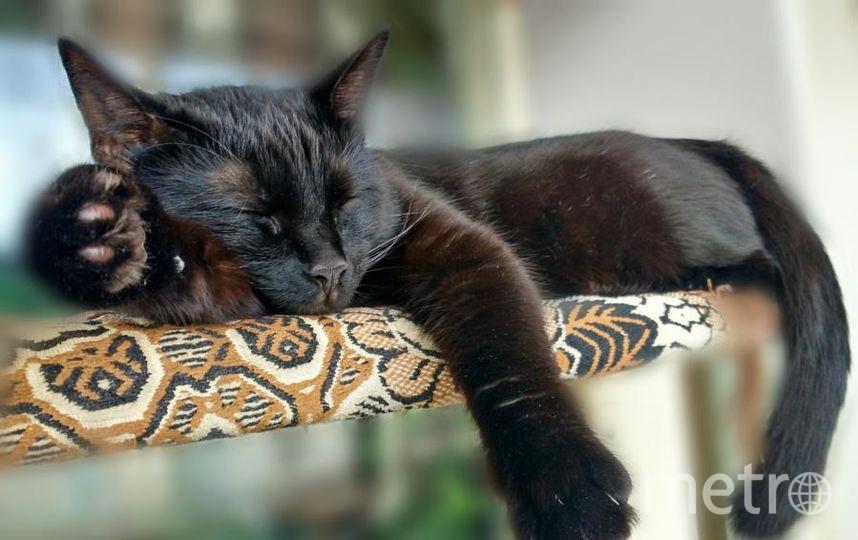 """Моего кота зовут Снежок. Он очень любит спать в кастрюлях, в тазиках и в раковине. Фото Анна., """"Metro"""""""