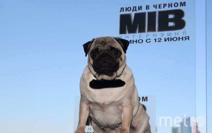 Крис Хемсворт нашёл в Москве родственную душу. Фото Василий Кузьмичёнок