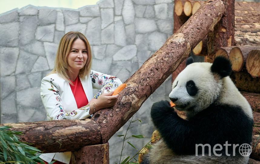 Если Диндин (на фото) и Жуи в Московском зоопарке будет комфортно, они смогут остаться здесь и после истечения договора о сотрудничестве с Китаем. Пока что он подписан на 15 лет. Фото предоставлено пресс-службой Московского зоопарка