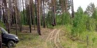 Годовалого лосёнка перевезли в лес из Новосибирского зоопарка