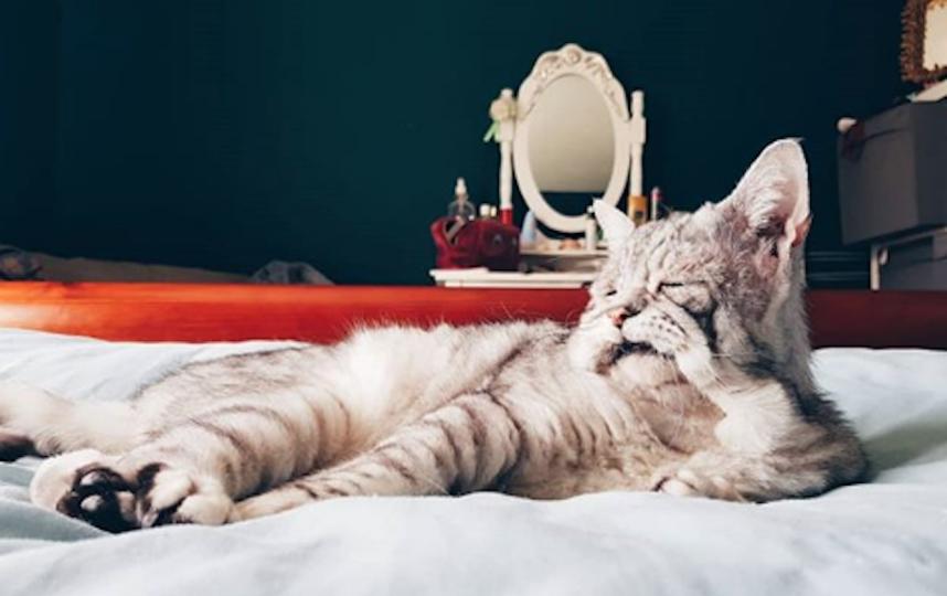 Самый грустный кот по кличке Тоби. Фото www.instagram.com/tummyandgummy