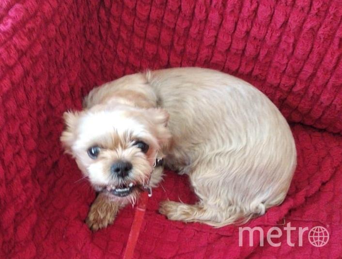 Это Франческа. Она злючка-колючка. Считает диван своей собственностью и никому не даёт на него садиться. Фото Наталья