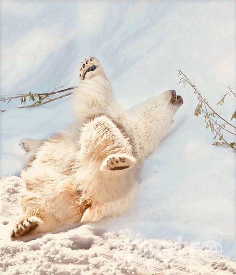 """На экспозиции """"Полярный мир"""" жара совсем не ощущается. Фото предоставлено пресс-службой Московского зоопарка"""