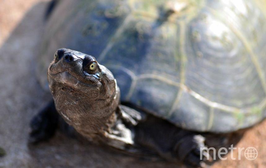 Черепаха. Фото Pixabay