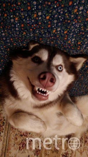 """Это Оскар! Хороший, добрый мальчик, но иногда может и зубки показать! Анна. Фото """"Metro"""""""
