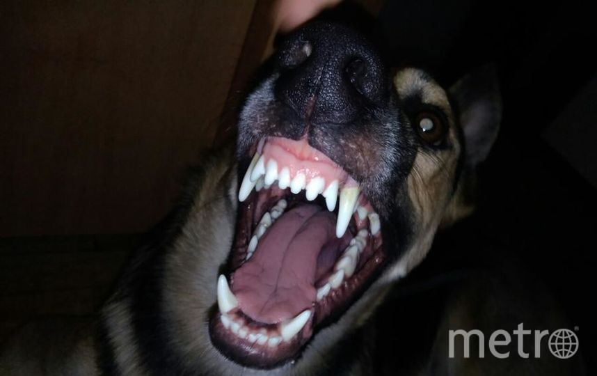 """Надежда Козак и наш хитроумный пес метис Фредди ему 1годи 4 месяца. Фото """"Metro"""""""