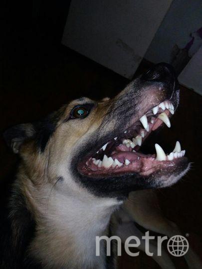 """Козак Надежда. И наш хитроумный пес Фредди. Фото """"Metro"""""""