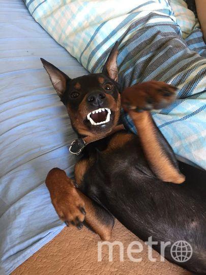 "Направляю фото Джимми. Собака-улыбака. Фото ""Metro"""