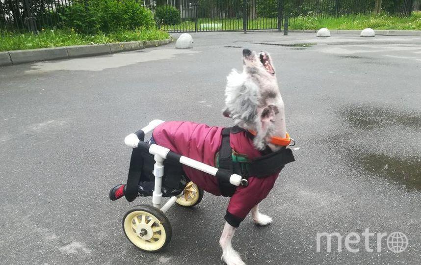 """Собака - Тоша. Это наш любимый и добрейший пес.... Фото Людмила, """"Metro"""""""