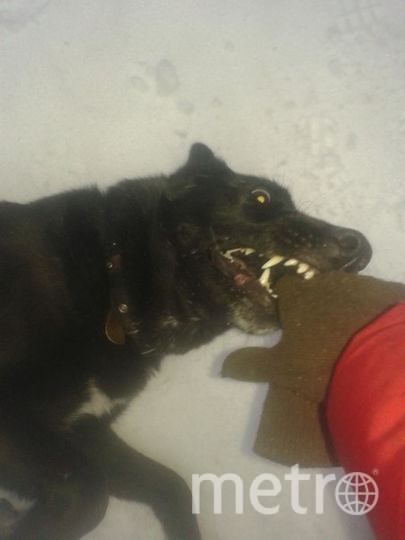 "Собаку зовут Грета. Фото ""Metro"""
