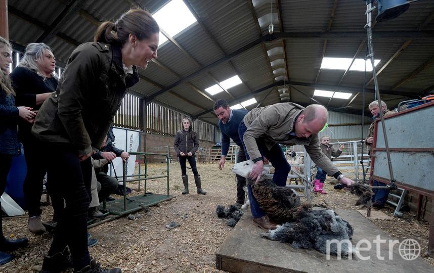Принц Уильям и Кейт Миддлтон на ферме. Фото Getty