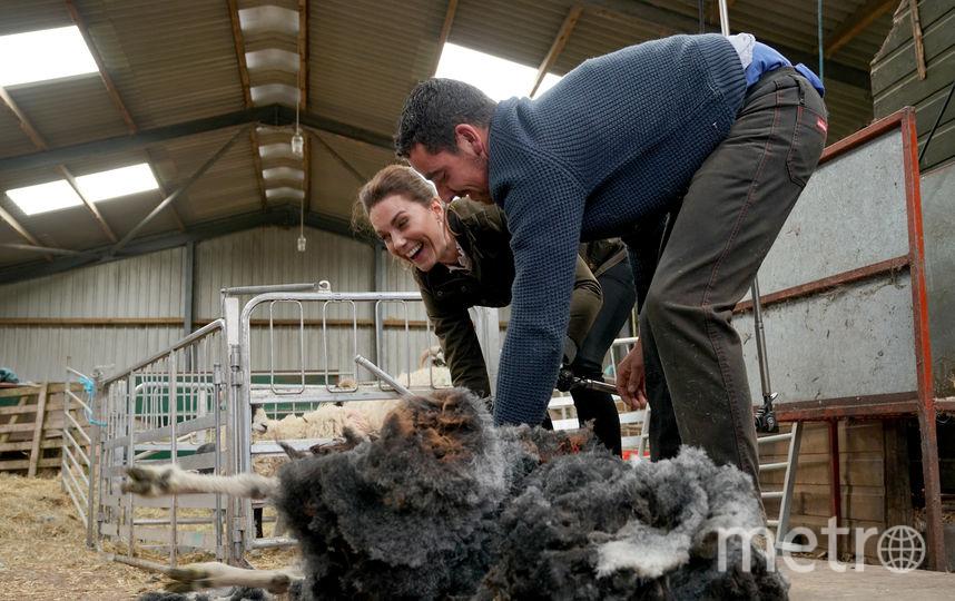 Стрижка овец. Фото Getty