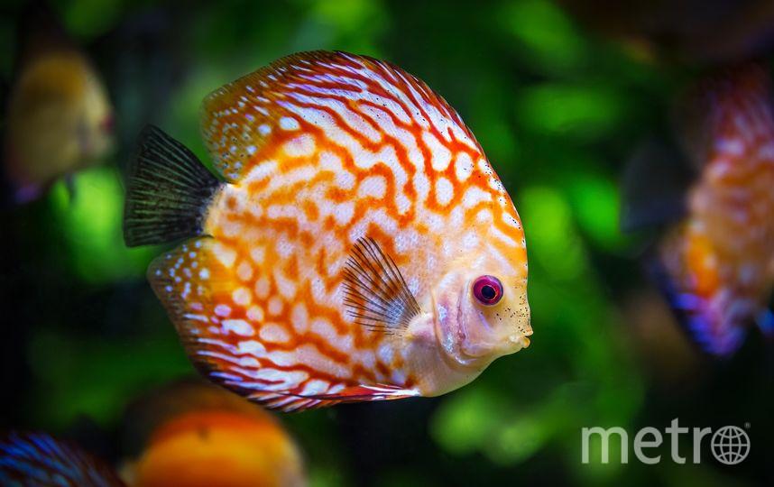 Рыбы тоже подвластны чувствам. Фото https://pixabay.com/
