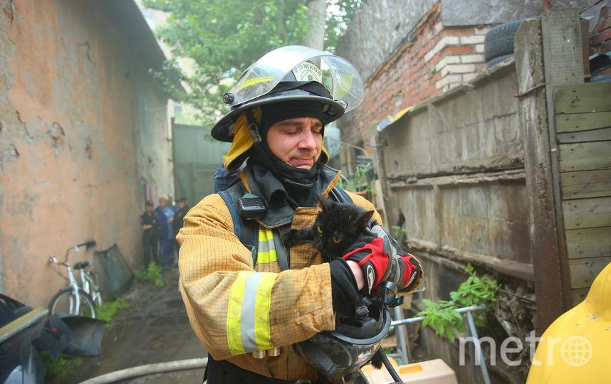 Спасение котов во время пожара. Фото МЧС по Санкт-Петербургу