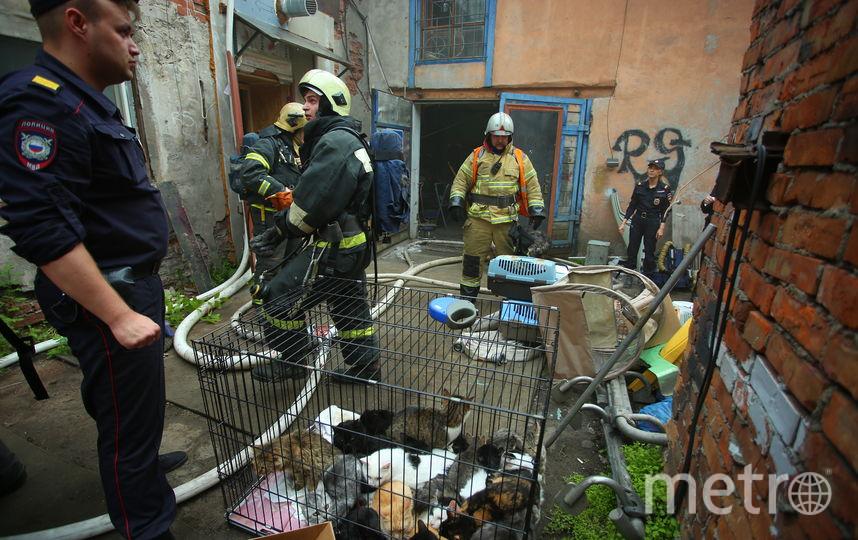 Спасенные коты. Фото МЧС по Санкт-Петербургу