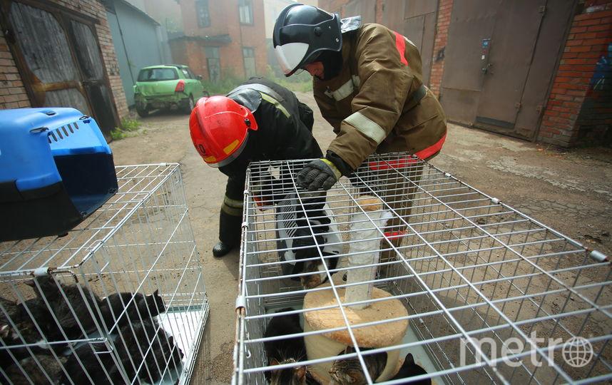 В приюте на Васильевском произошел пожар. Фото МЧС по Санкт-Петербургу