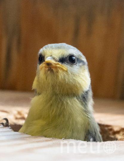 """Если вы нашли раненого птенца, нужно обратиться к орнитологам или в ветклинику. Фото Алена Бобрович, """"Metro"""""""
