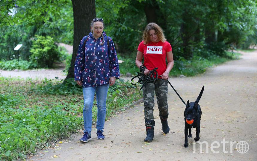 Спустя несколько минут прогулки собака привыкает к новому хозяину и начинает его слушаться. Фото Василий Кузьмичёнок