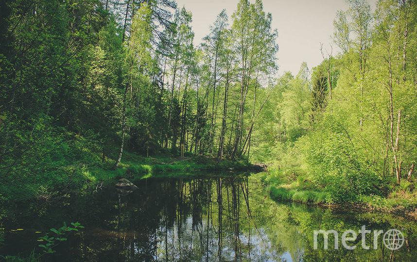 Линдуловская роща. Фото infoeco