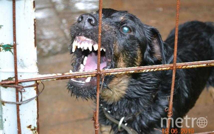Нашего ягдтерьера зовут Гюнтер!!! Он милый, дружелюбный, добрый пес, но все меняется когда он охотится или видит свой вольер!!! Сразу видно - наш собачий сын просто душка. Фото Елена и Юрий