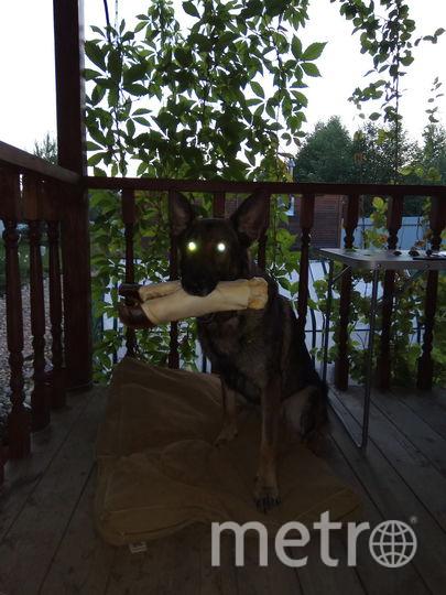 Собака моих детей Жескар. У этого спортсмена-победителя о горящем сердце говорят глаза. Фото Лариса