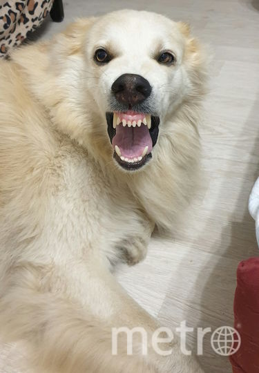 Самый добрейший в мире пёс Лаки. Фото Светлана