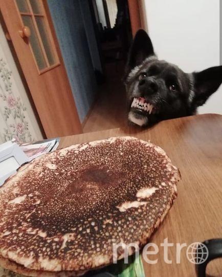Это Сеня! Метис алабая и американской акиты. Он жуткий попрошайка и любитель блинчиков! Ни один семейный ужин не обходится без его присутствия под столом. Фото Ксения