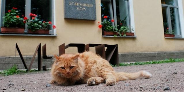 У входа в музей гостей встречает рыжий кот Иося, названный в честь Иосифа Бродского.