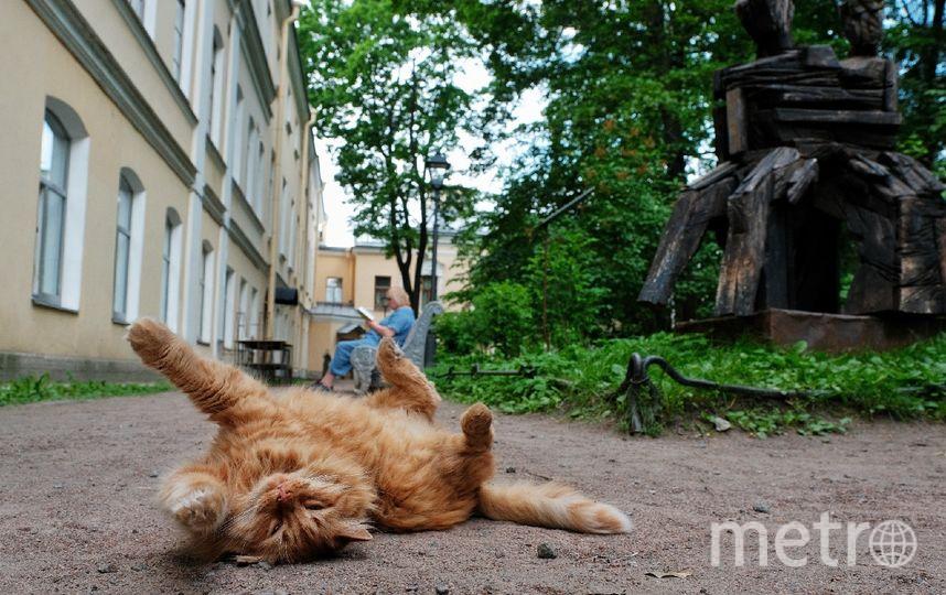 """У входа в музей гостей встречает рыжий кот Иося, названный в честь Иосифа Бродского. Фото  из собрания музея, """"Metro"""""""