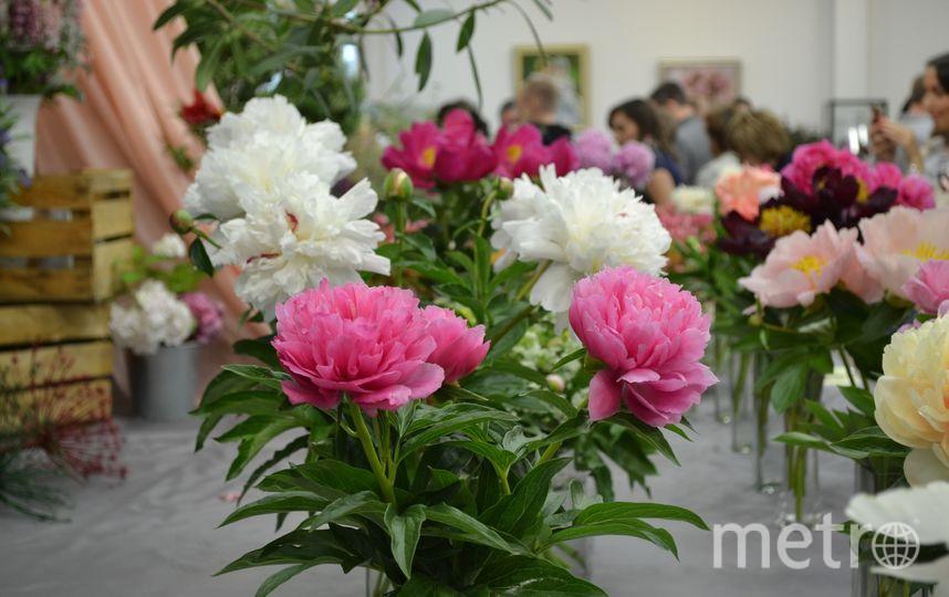 Фестиваль пионов. Фото Ботанический сад, Предоставлено организаторами