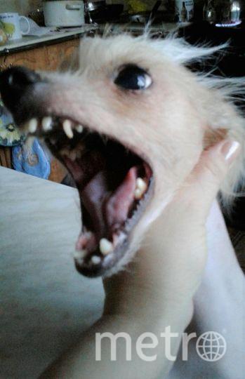 """Собаку зовут Моника. Она Настоящая ЖЕНЩИНА -дерзкая, самоуверенная и очень любопытная, делает только то, что хочет.. Фото Аюпова Людмила., """"Metro"""""""