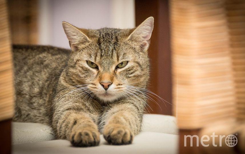 Кот, архивное фото. Фото Pixabay
