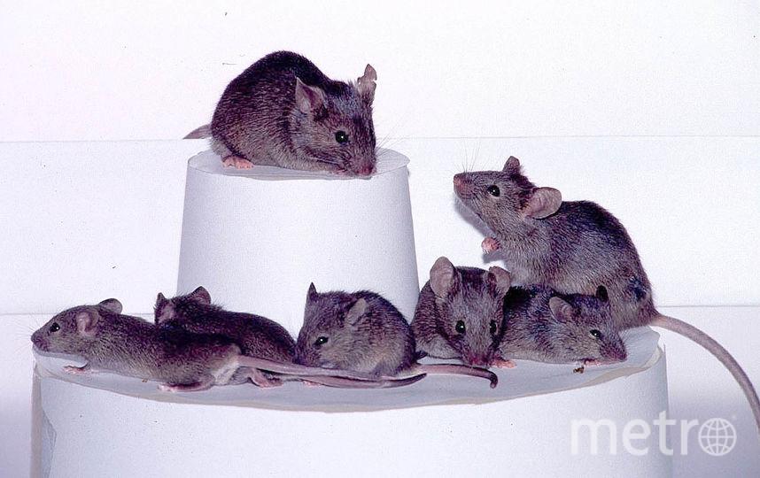 Букингемский дворец подвергся нашествию крыс. Фото Getty