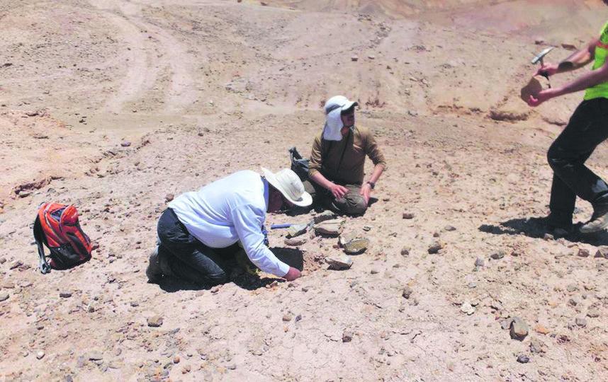 Группа исследователей из Университета Чили обнаружила в самой засушливой пустыне мира скелет и череп плезиозавра.